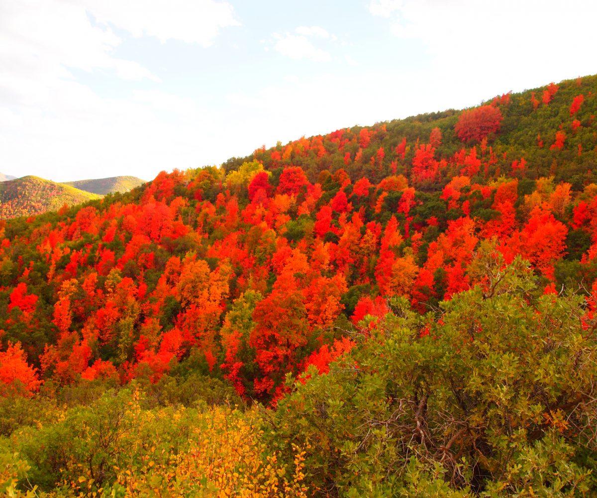 Beautiful fall colors along Cascade Scenic Drive