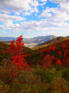 Overlooking Deer Creek along Cascade Scenic Drive