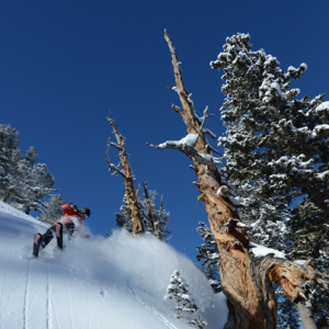 Picture of Solitude Ski Resort